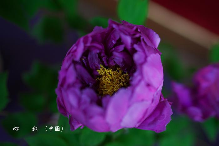 DSC01598.jpg