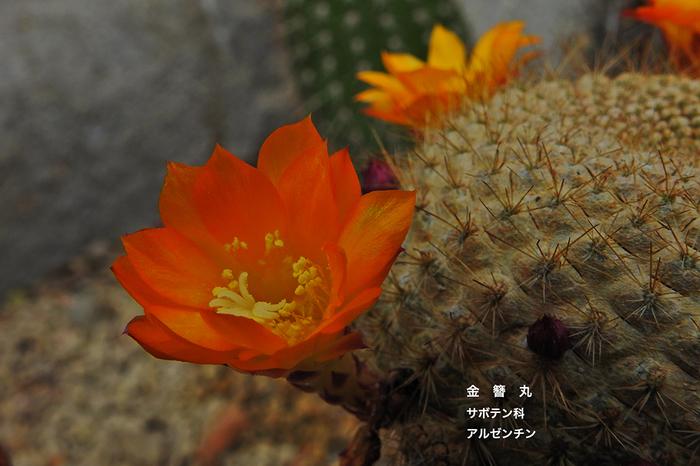 DSCN0191.jpg