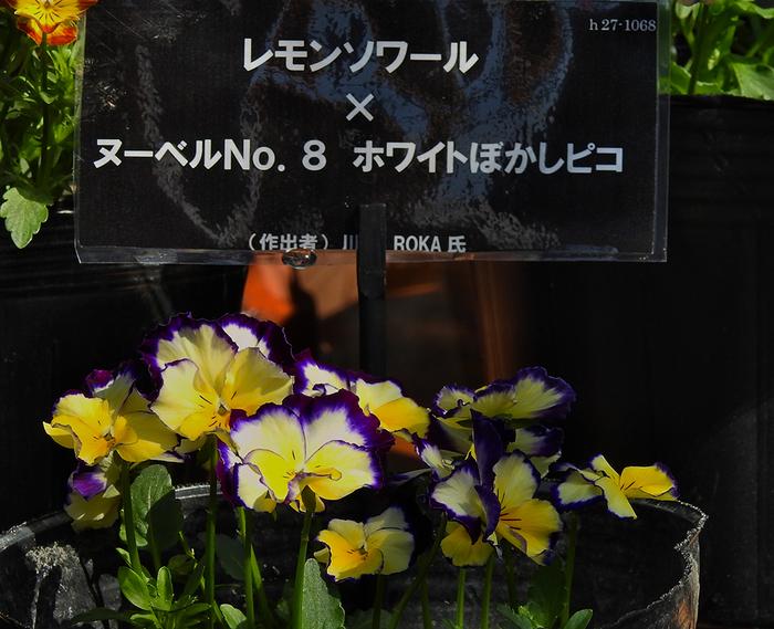 DSCN0546.jpg
