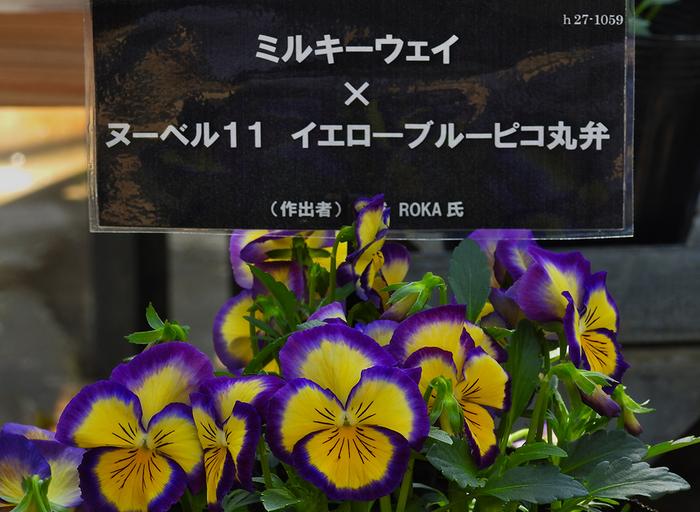 DSCN0549.jpg