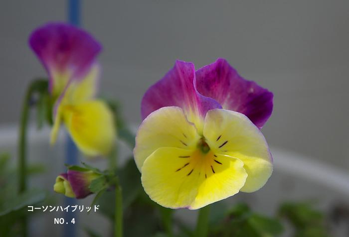 P3100931.jpg