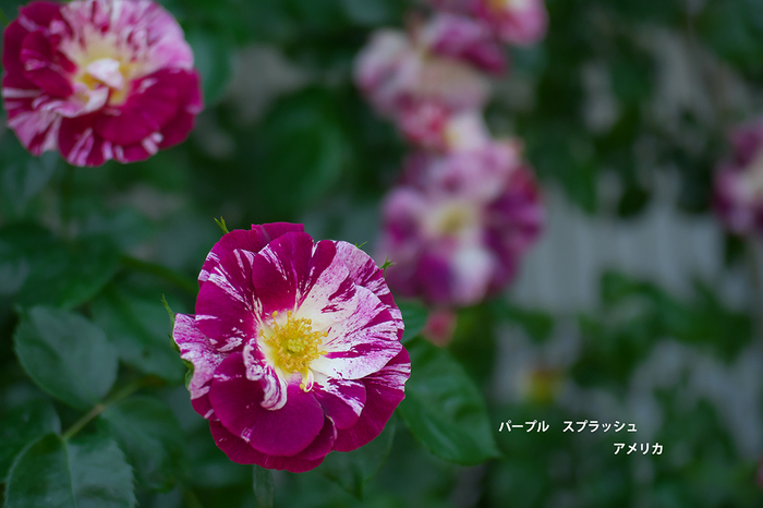 P5110603.jpg