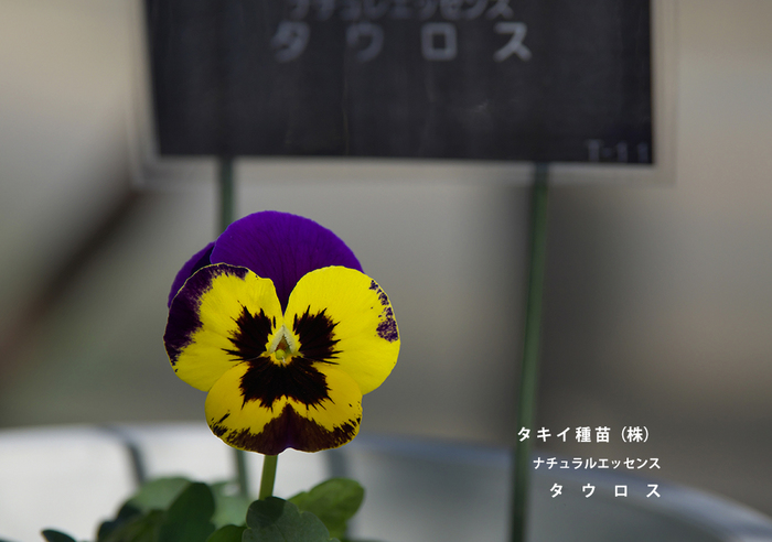 P3101037.jpg