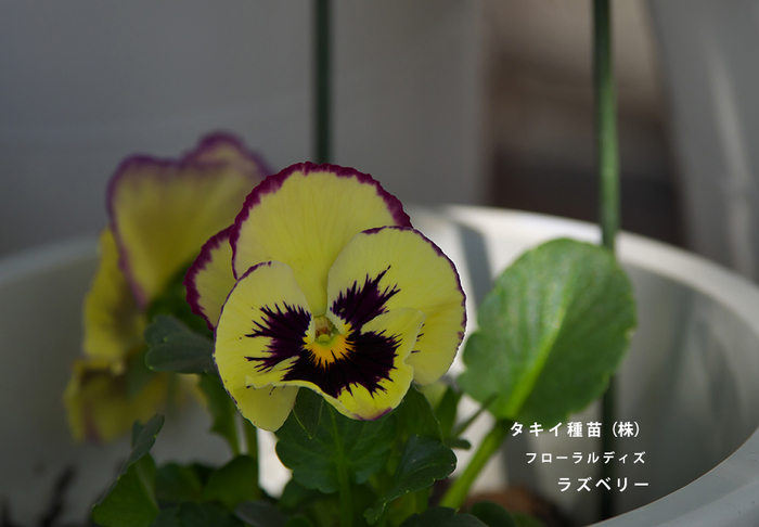 P3101041.jpg